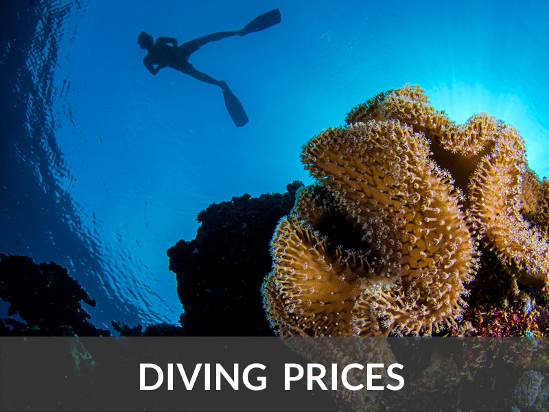 Diving Prices | DIVE LOFT KRK | Croatia